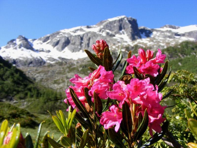 09-la-neve-lascia-il-posto-ai-rododendri-katia-mazzoleni