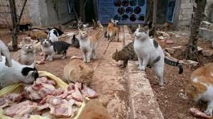 Il gattile di Ernesto, l'ora della pappa