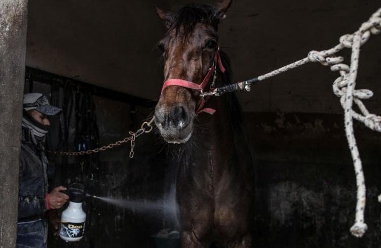 6 Le Mulina, i cavalli sono atleti, dopo l'attività vanno raffreddati e massaggiati