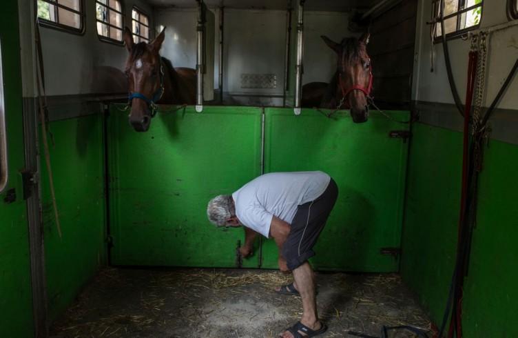 21 Visarno, dopo le corse i cavalli tornano sul trailer