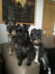Ritratto dei cani di McVicar (foto per sua gentile concessione)